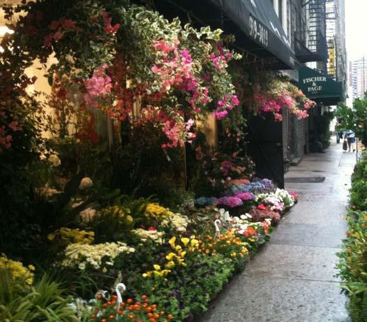 U003c U003e Foliage Garden Store